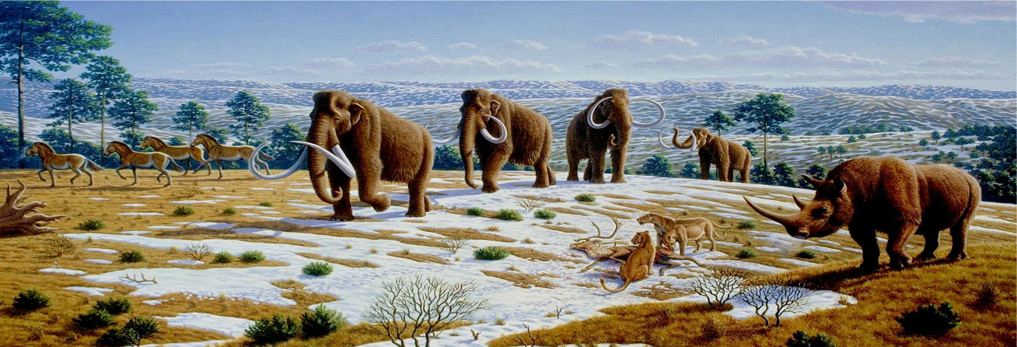 Alive found woolly mammoth Woolly mammoth